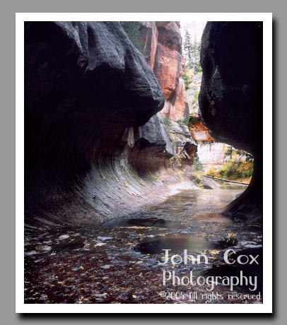 The Left Fork of North Creek flows through the subway-like narrows of the Subway in Zion National Park, Utah.